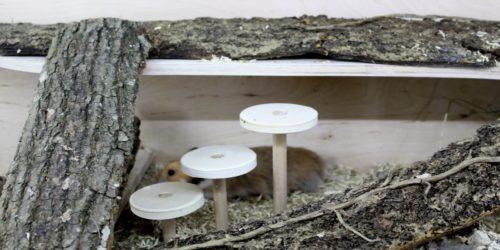 Einrichtungsideen für den Hamsterkäfig