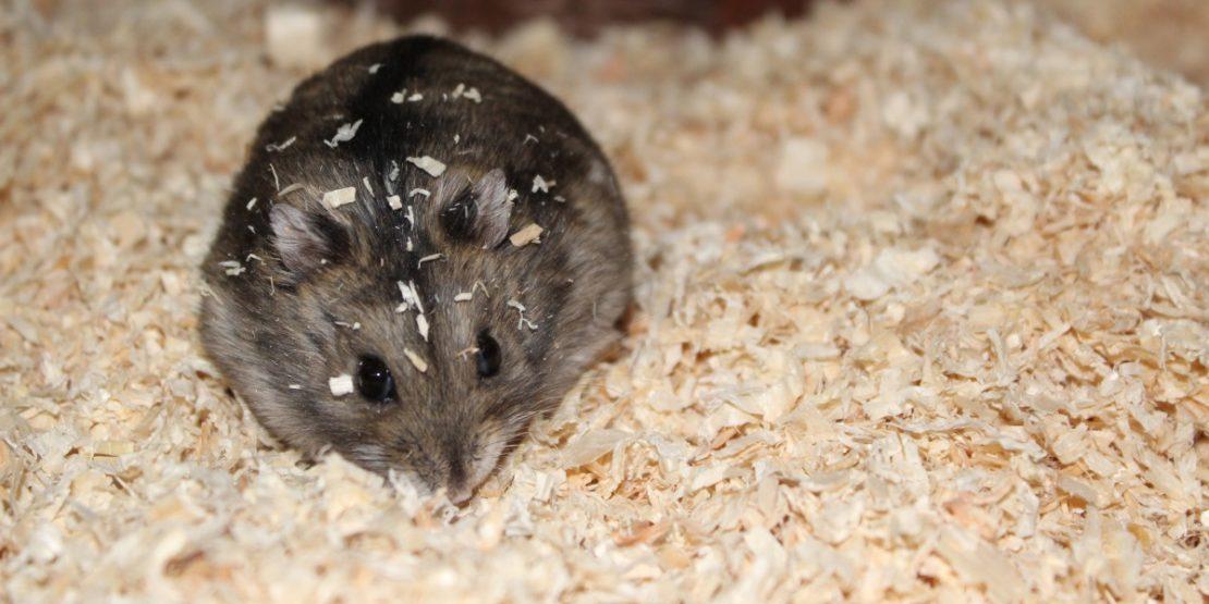 Einstreu für den Hamsterkäfig