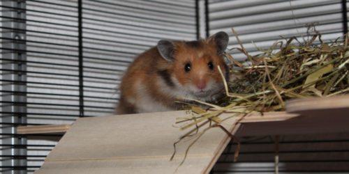 Etagen als Einrichtung im Hamsterkäfig