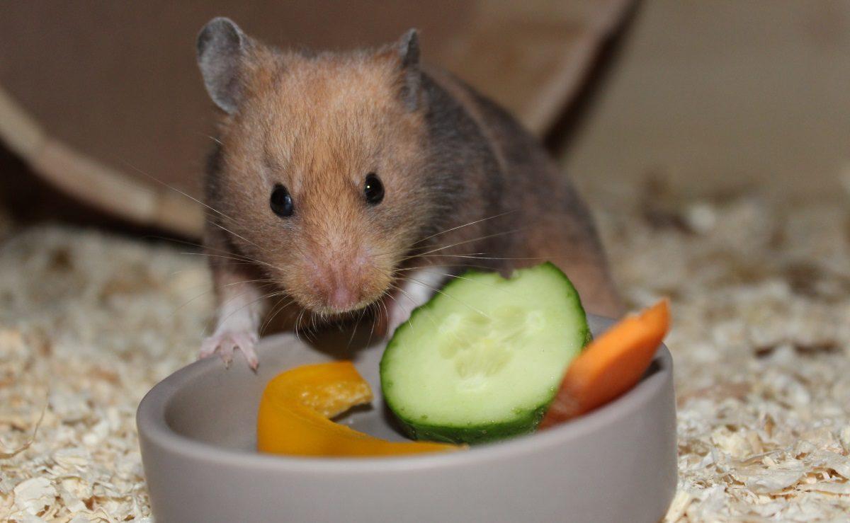Gemüse in der Ernährung des Hamsters