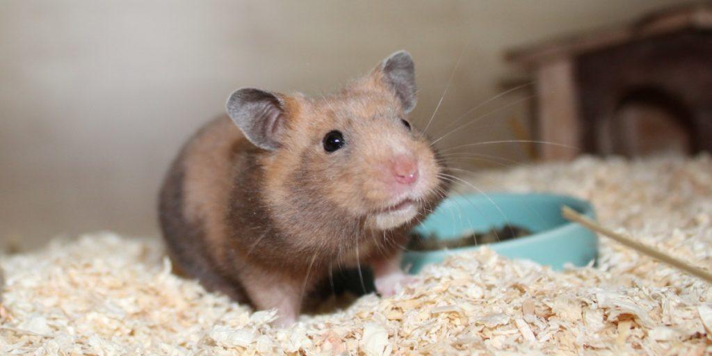 Viel Auflauf für den Hamster