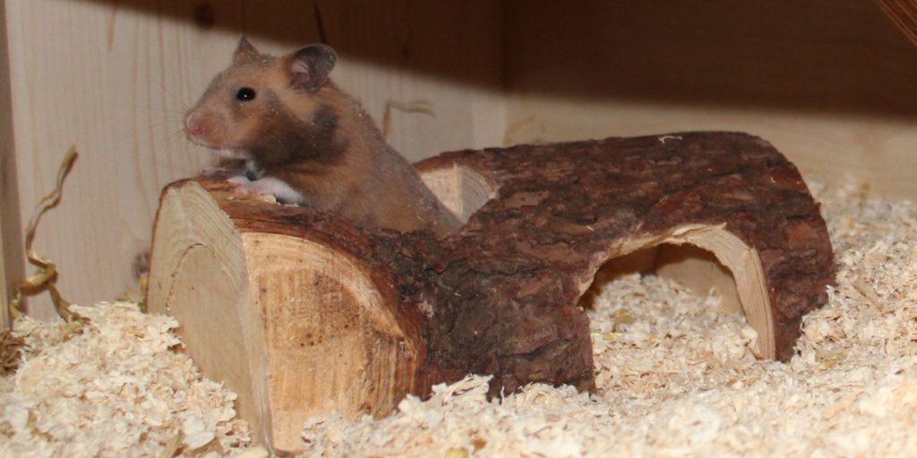 Hamsterkäfig einrichten - an Beschäftigung des Hamsters denken