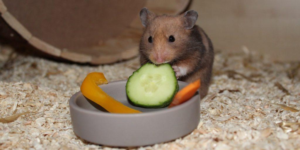 Platz für Futter im Hamsterkäfig