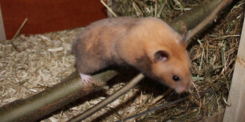 Klettermöglichkeiten beim Hamsterkäfig einrichten planen