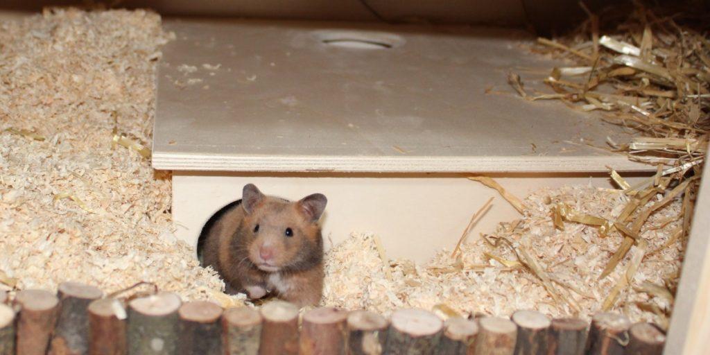 Bei der Einrichtung artgerechtes Hamsterhaus verwenden