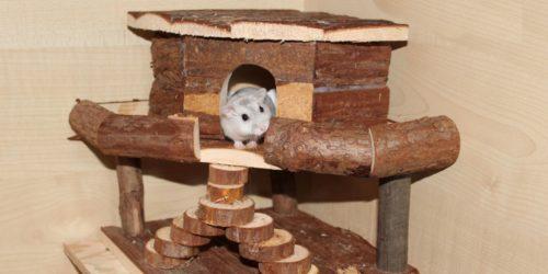 Hamsterhäuser im Käfig