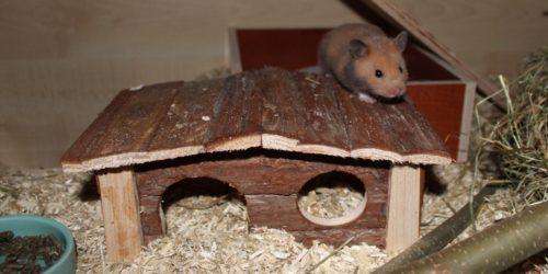 Das Hamsterhaus - Schlafplatz und Versteck