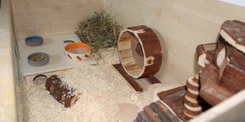 Den Hamsterkäfig einrichten