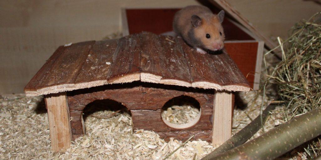 Hamsterkäfig einrichten: Das Hamsterhaus