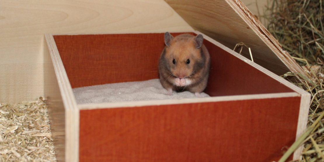Das Sandbad für den Hamster