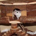 Das Spielhaus für Hamster
