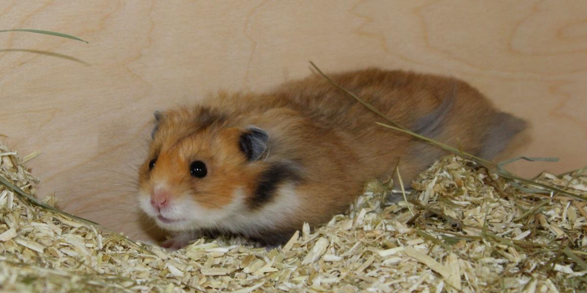Hamster Kaufen Zoohandlung Berlin