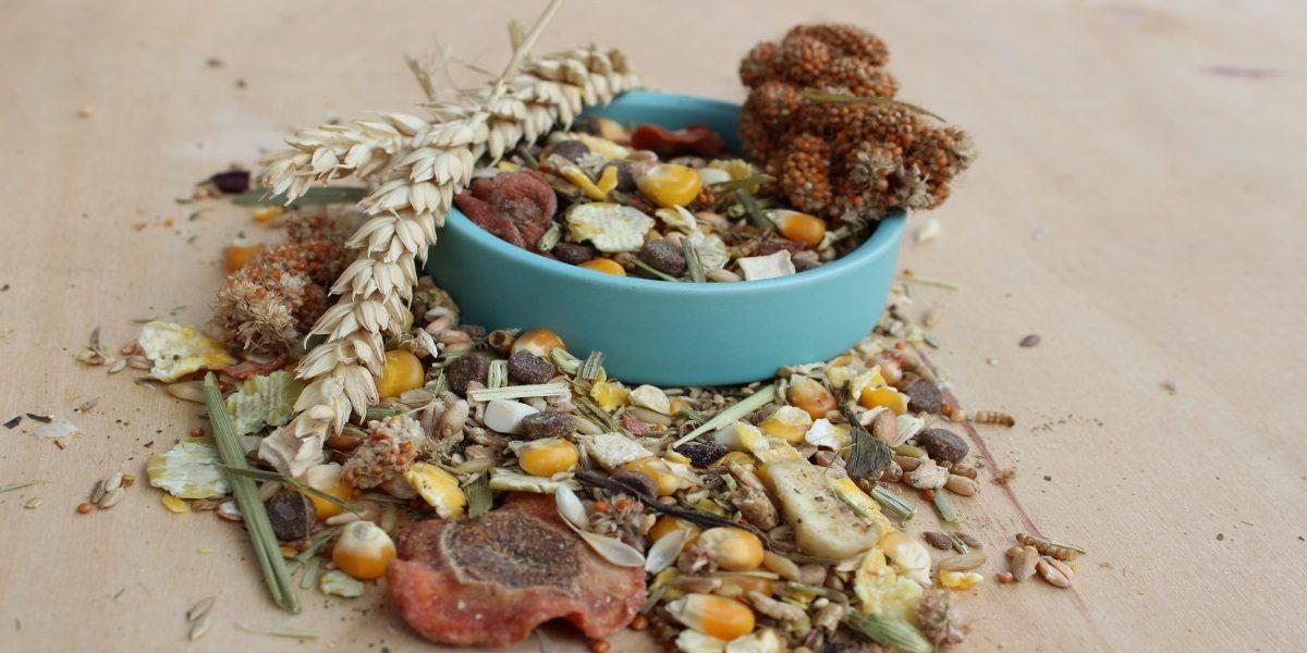 Trockenfutter zur Teddyhamster Ernährung