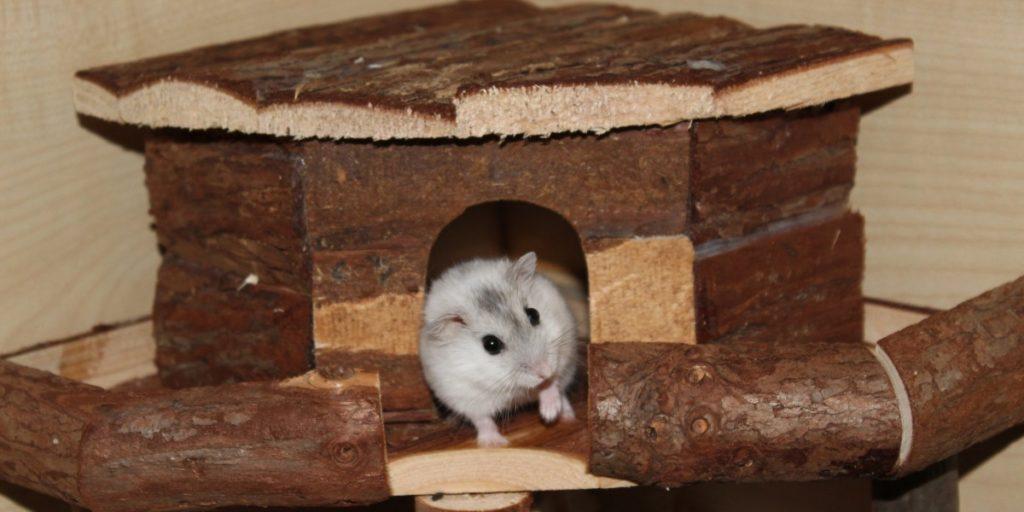 Artgerechte Unterkunft für den Hamster
