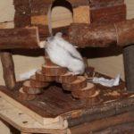 Hamster huscht ins Häuschen