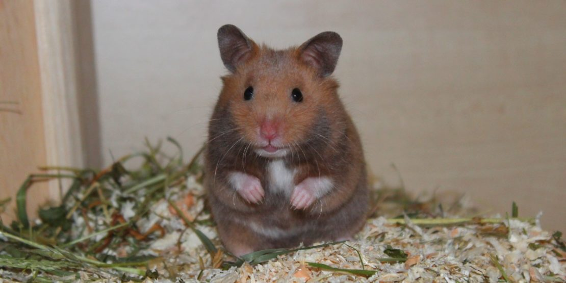 Hamster Platzhalter