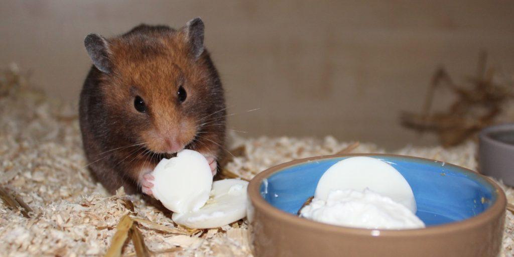 Eiweis im Hamsterfutter