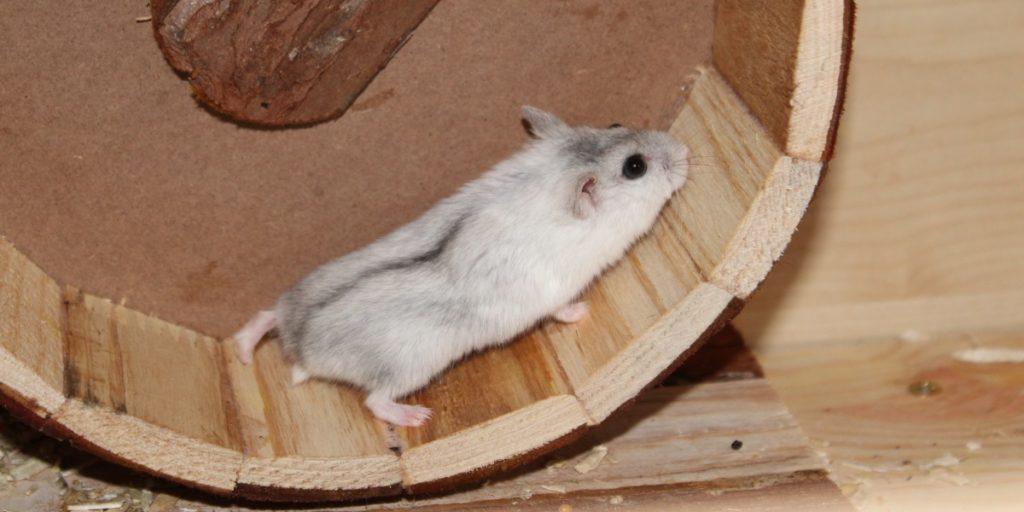 Hamster im Laufrad