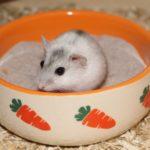 Hamster im Sand