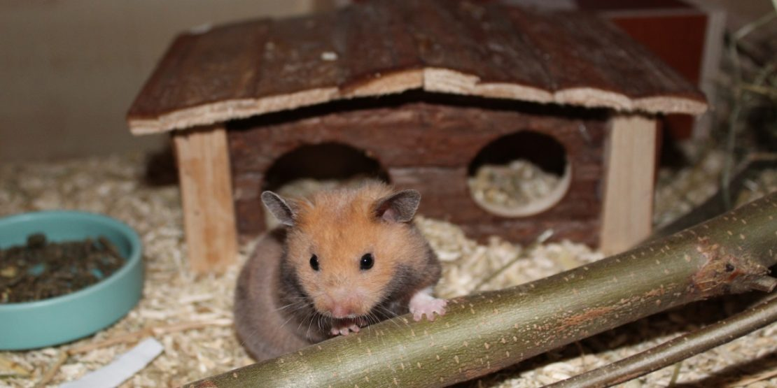 Schlafhaus für meinen Hamster