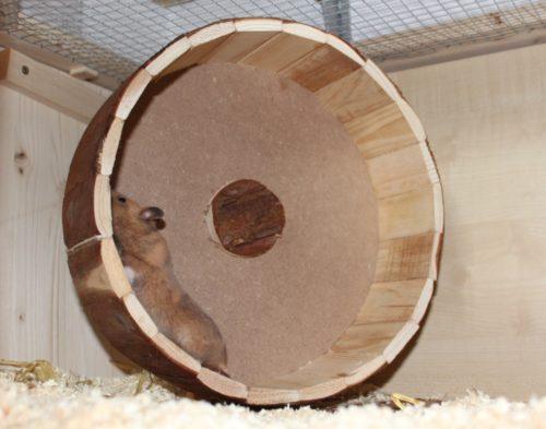Holzlaufrad mit unwucht