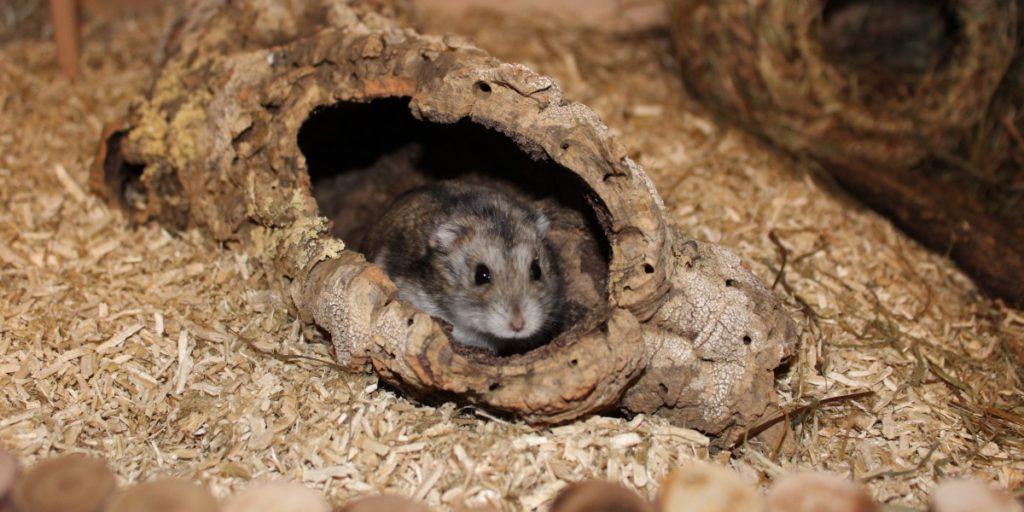 Korkröhre als Versteck im Hamsterkäfig
