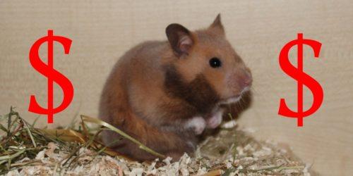 Wie viel kostet ein Hamster? - Antworten