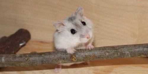 Passt ein Hamster zu mir? - Fragen