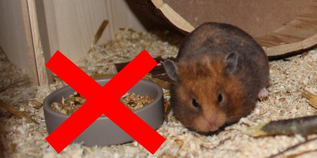 Verbotenes Hamsterfutter