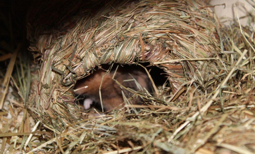 Die Vorratskammer des Hamsters