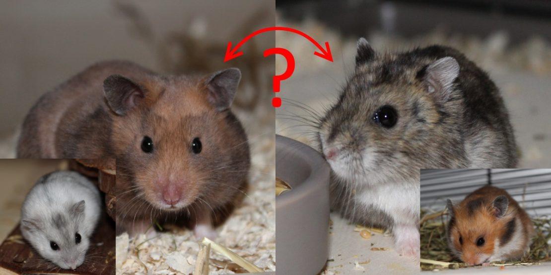 Welcher Hamster passt zu mir?