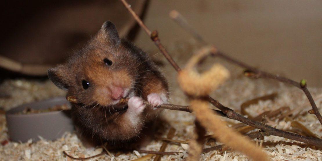 Zweige als Hamsterfutter