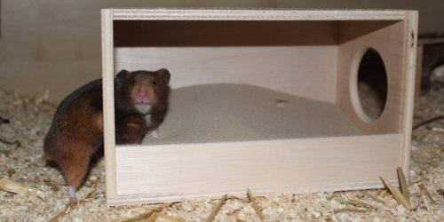 Badehaus für Hamster