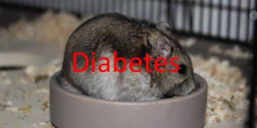 Diabetes beim Hamster