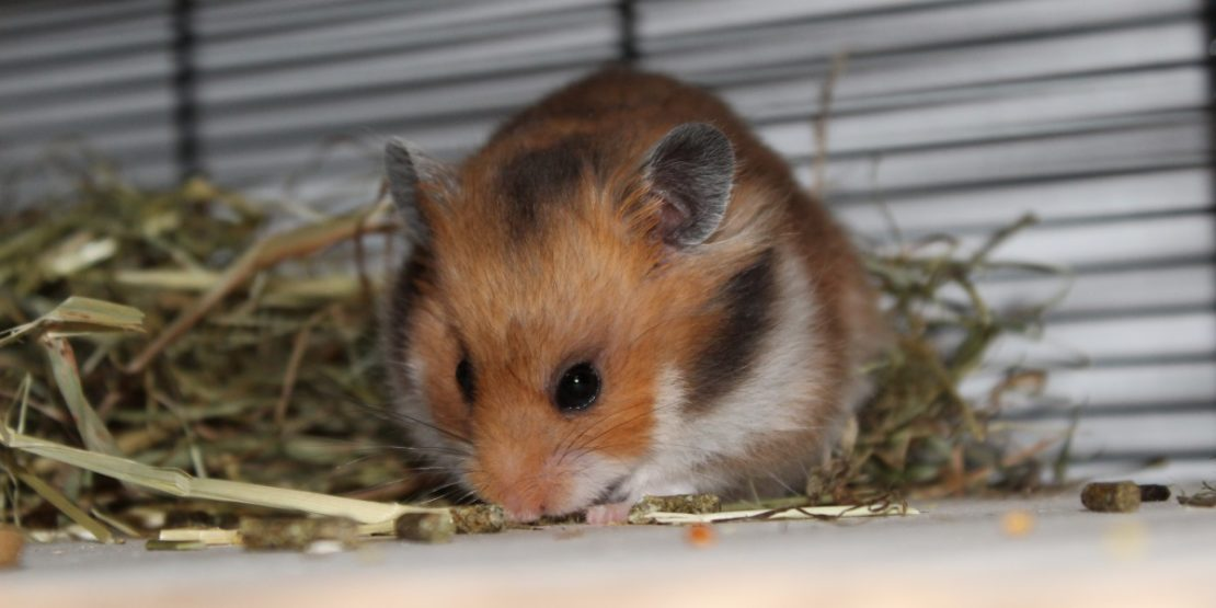 Futter für die Hamstermutter