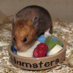 Zubehör rund um das Hamsterfutter