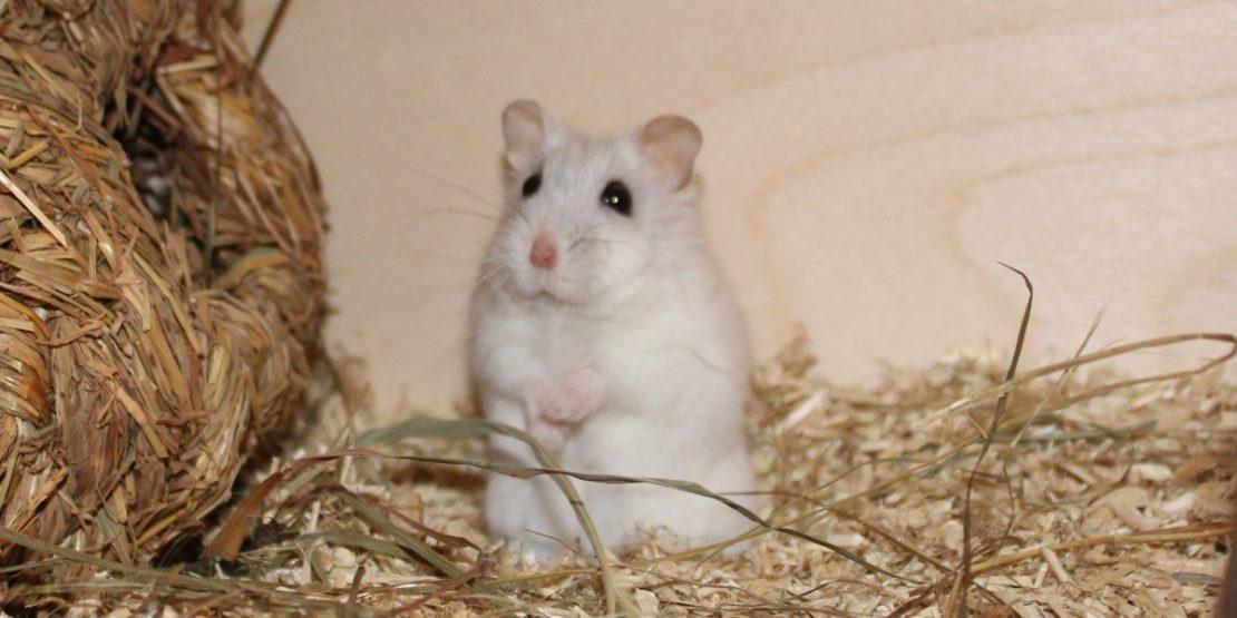 Der Gesundheitscheck beim Hamster
