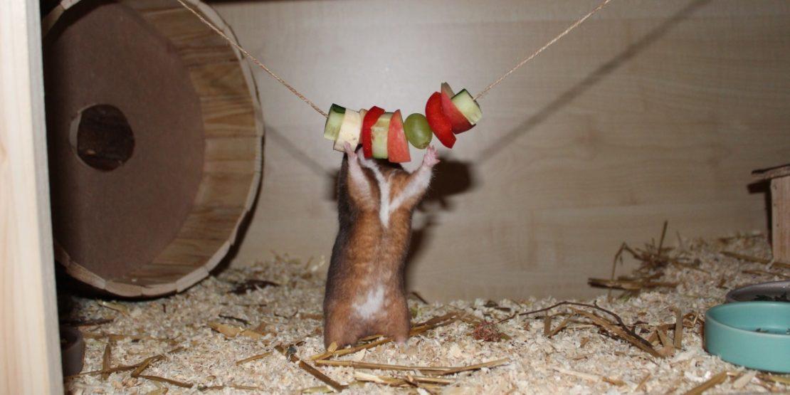 Beschäftigung für den Hamster