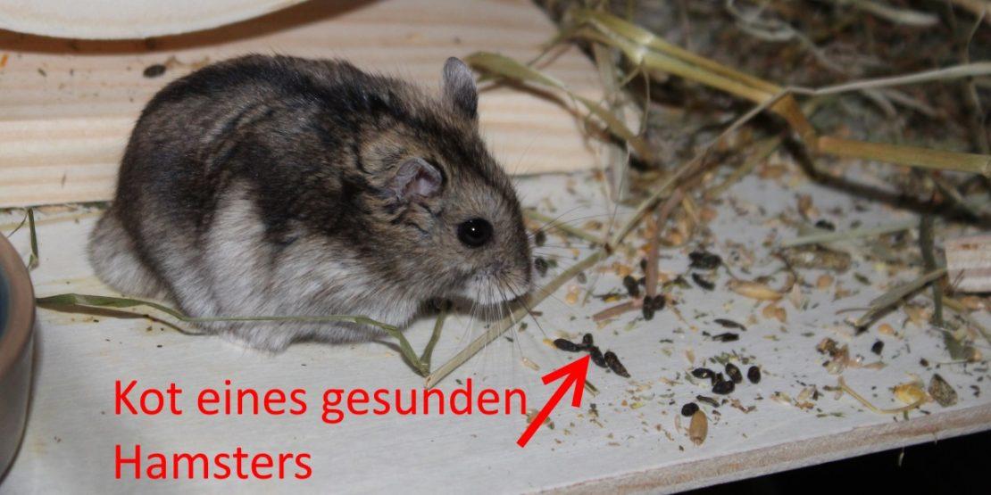 Durchfall beim Hamster