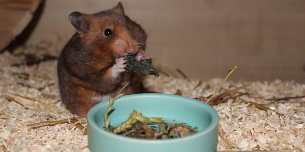 Kräuter als wichtiger Bestandteil der Hamster Ernährung