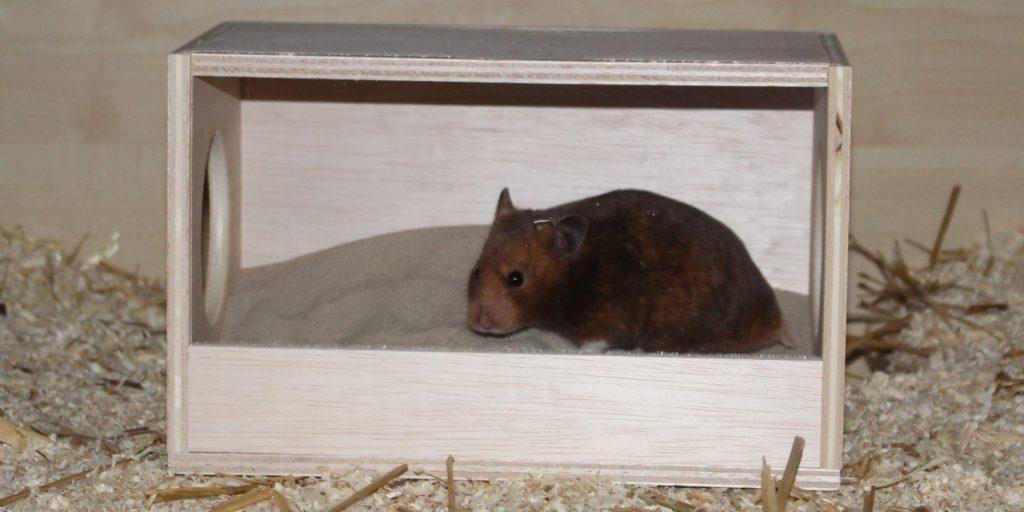 Hamster im Badehaus