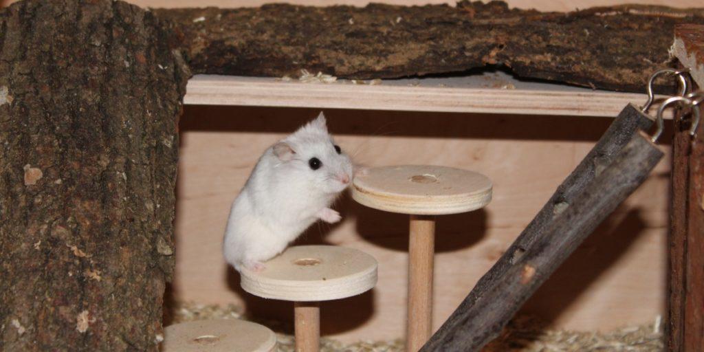 Hamster ist agil und klettert