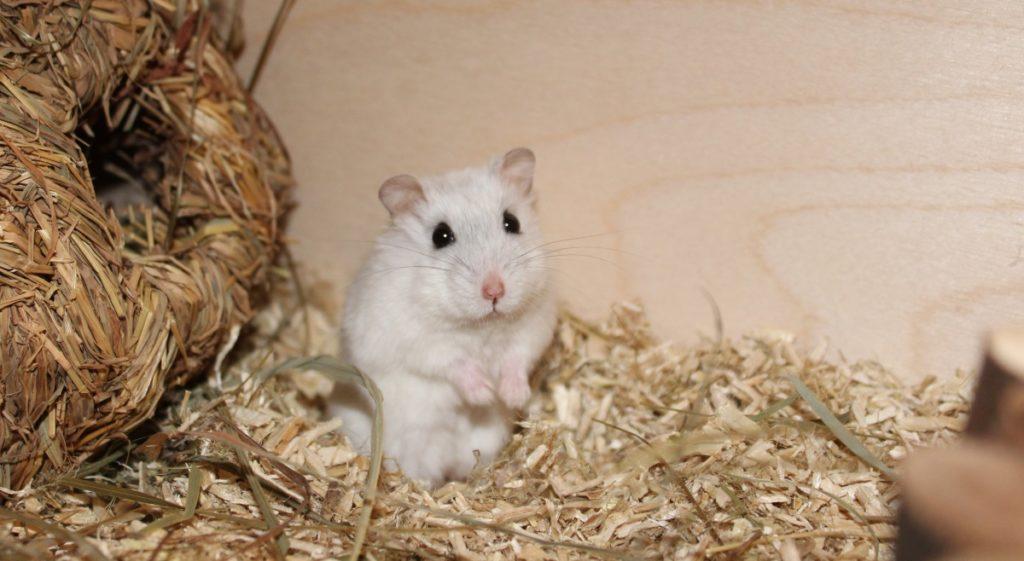 Hamster möchte Aufmerksamkeit erregen