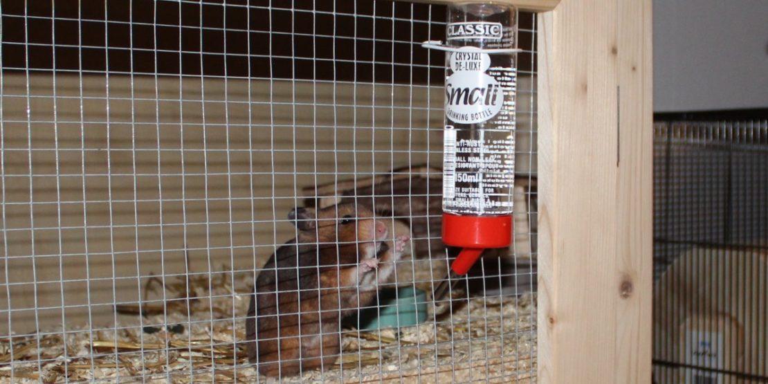 Die Hamster Trinkflasche