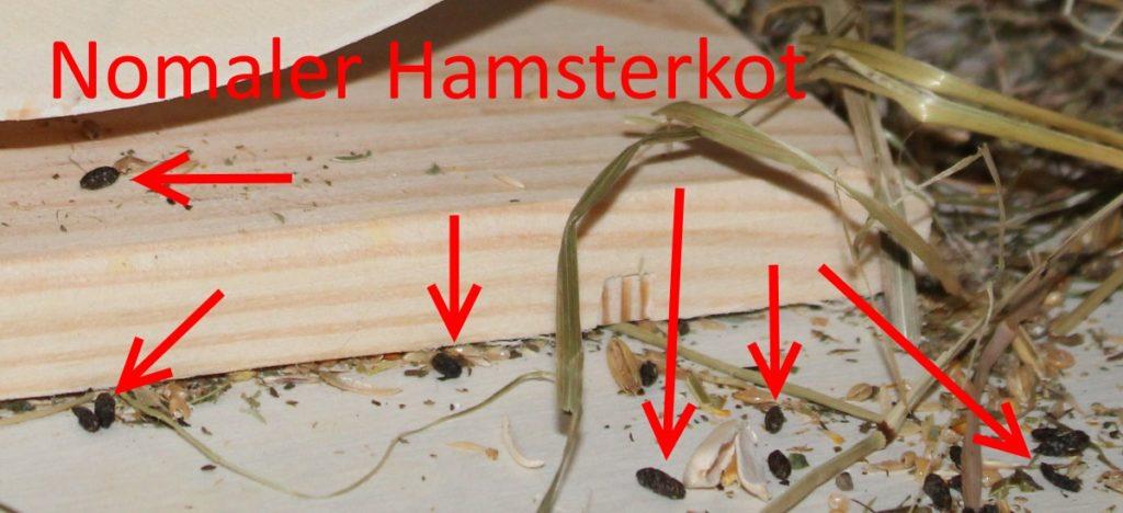 Normaler Hamsterkot - Kein Durchfall vorhanden