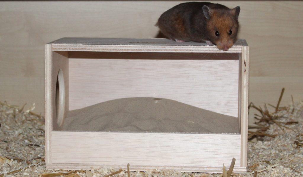 Hamster auf dem Dach seines Sandbades