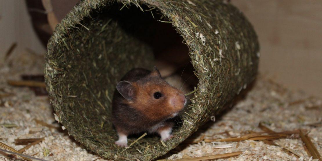 Der Heutunnel für den Hamster