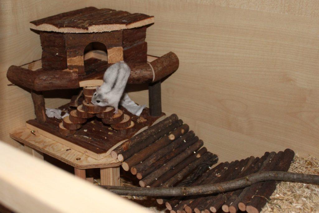Klettermöglichkeiten im Hamsterkäfig