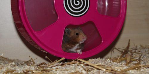 Kunststoff Laufrad für den Hamster