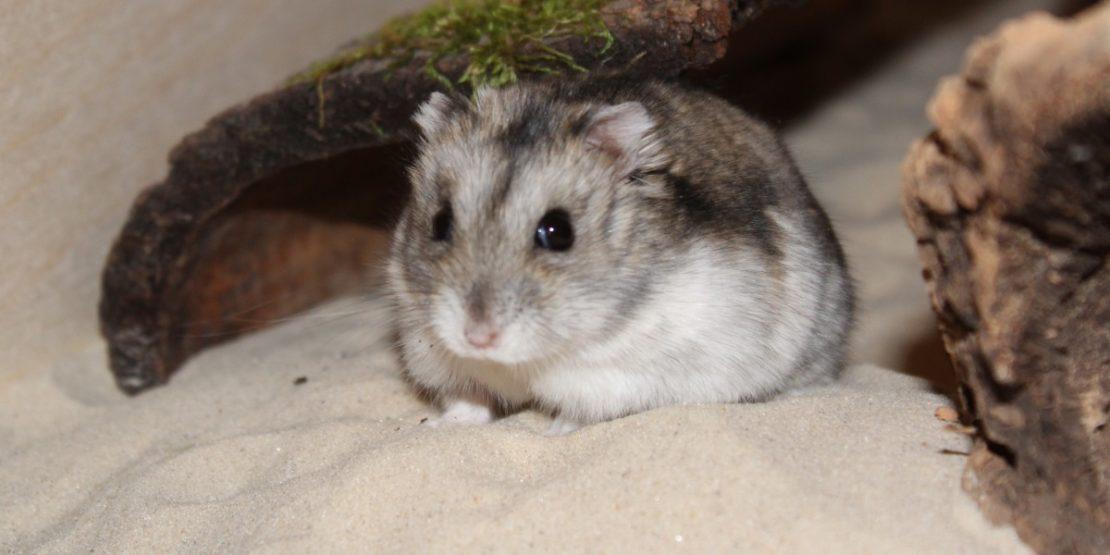 Sandbad für den Hamster